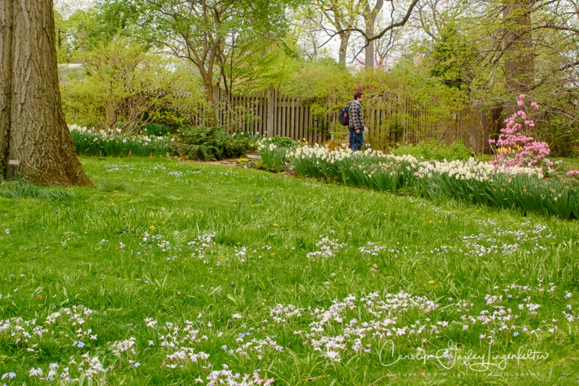 2017_04_21_Cleveland_Botanical Garden0064