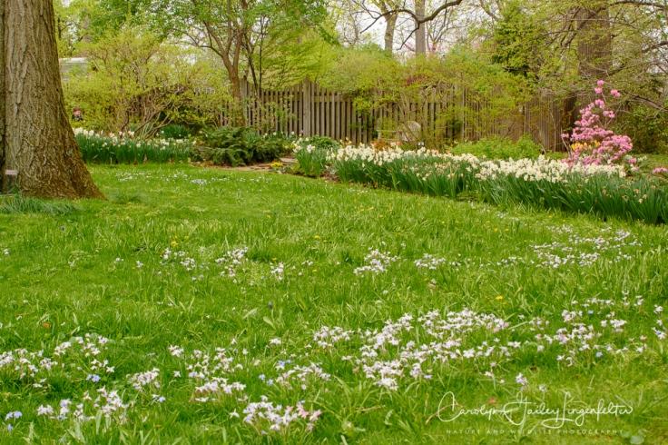 2017_04_21_Cleveland_Botanical Garden0065