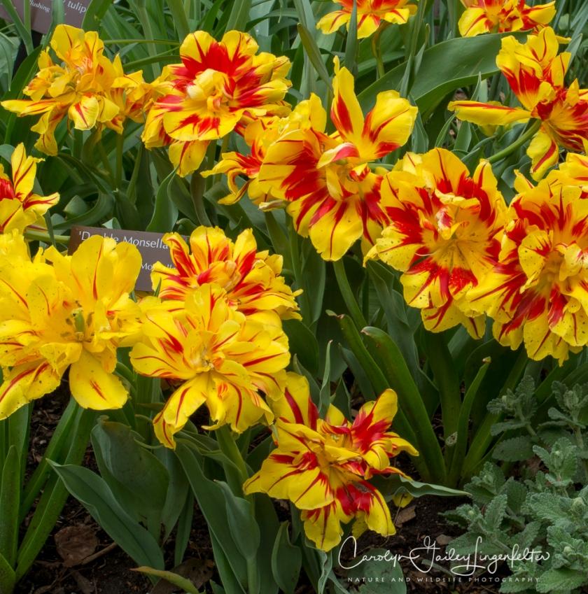 2017_04_21_Cleveland_Botanical Garden0076