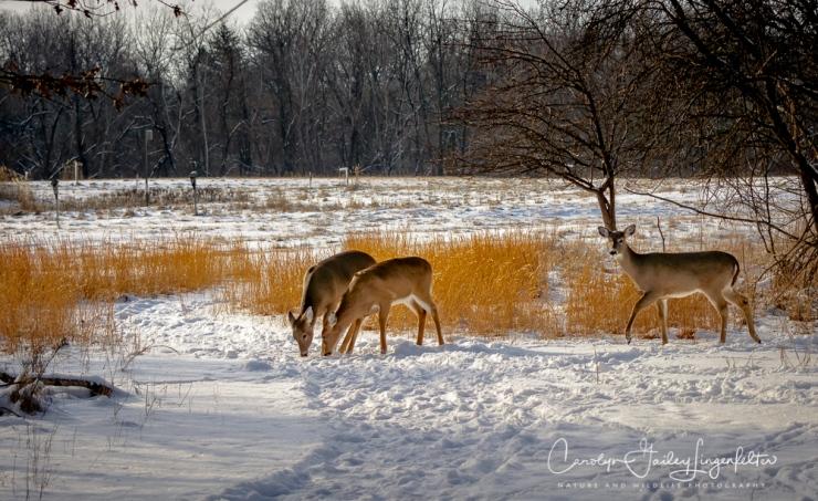 2018_02_06_Trailwalking_Chagrin River Park_0003