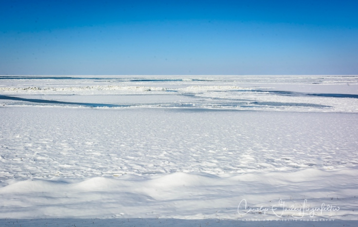 2018_02_12_Winter 2018_Lake Erie in MOL_0009