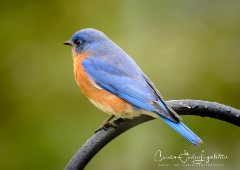 2018_02_23__Backyard_Backyard birding_0016