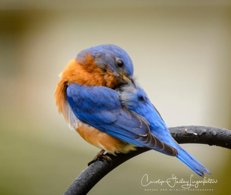 2018_02_23__Backyard_Backyard birding_0018
