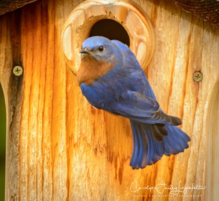2018_03_07__Spring_Backyard birding_0014