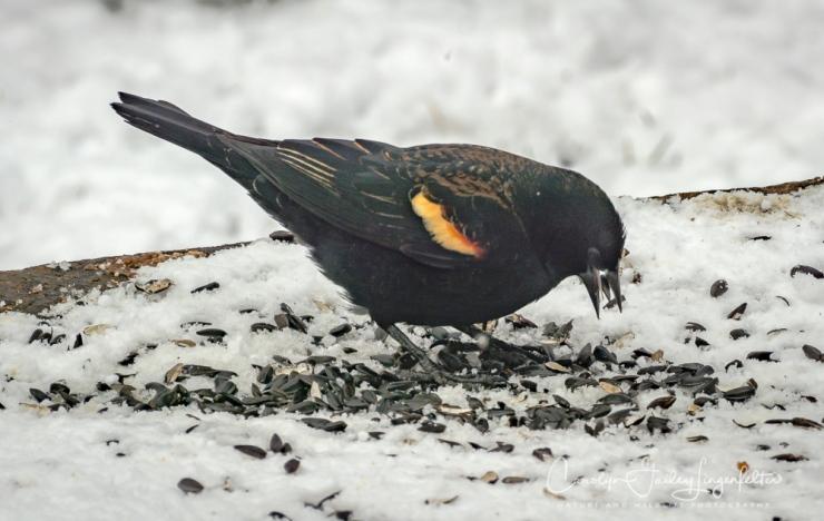 2018_03_08__Backyard Birding_0011