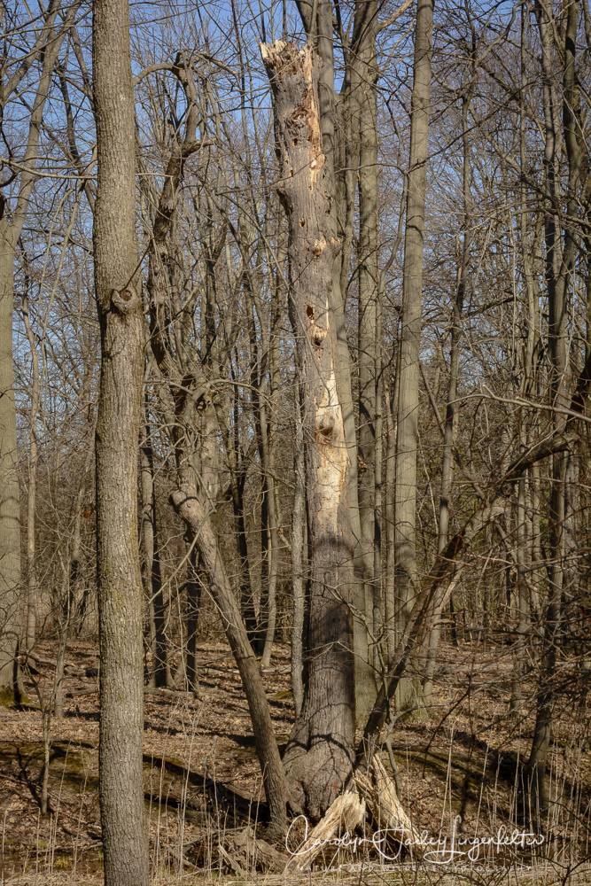 2018_03_26__Chagrin River Park_0080