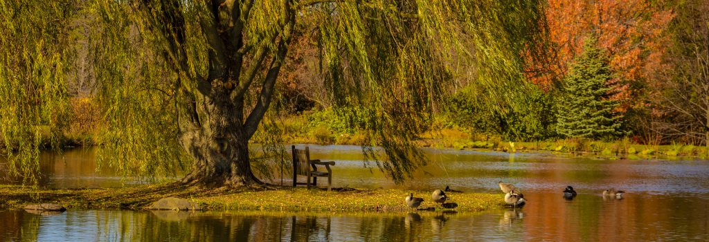 cropped-2016_11_10_places_holden-arboretum_004812.jpg