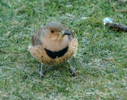 2018_04_19__back yard birding_0004-6