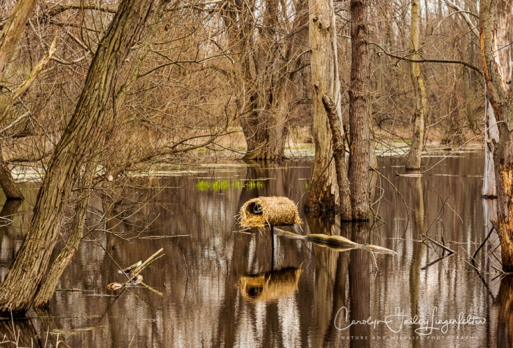 2018_04_27__Chagrin River Park_0105