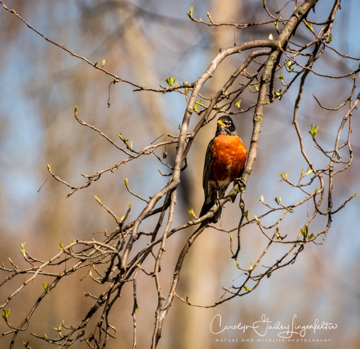 2018_04_30__Chagrin River Park_0092