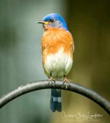2018_05_31__Backyard birding_0003