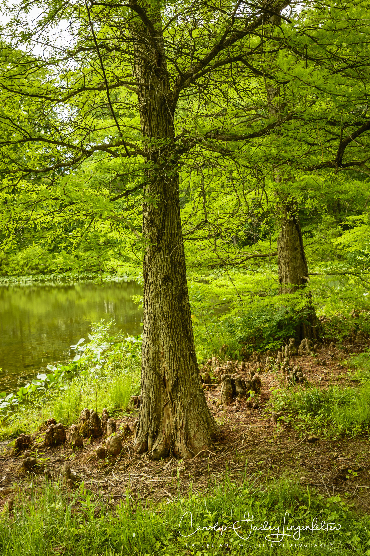 2018_06_05__Holden Arboretum_0053