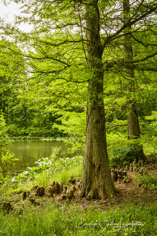 2018_06_05__Holden Arboretum_0058