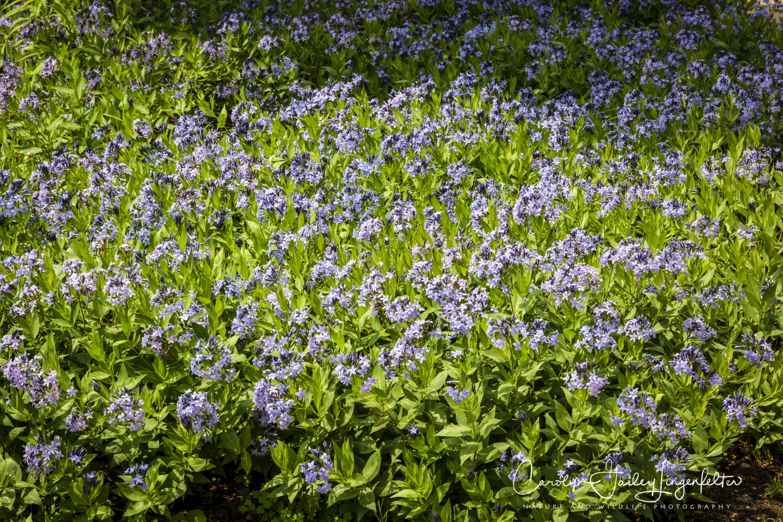 2018_06_05__Holden Arboretum_0114