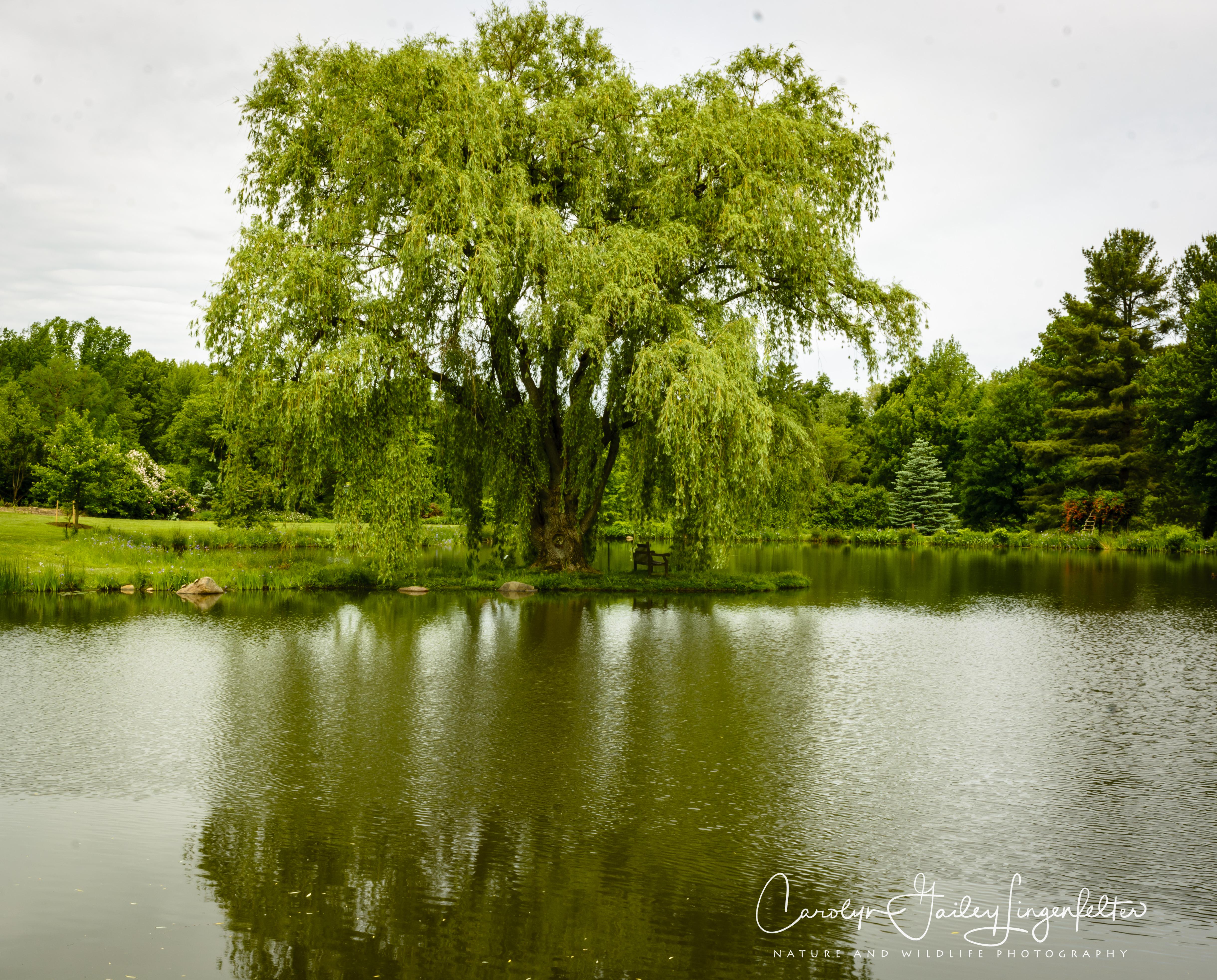 2018_06_05__Holden Arboretum_0117
