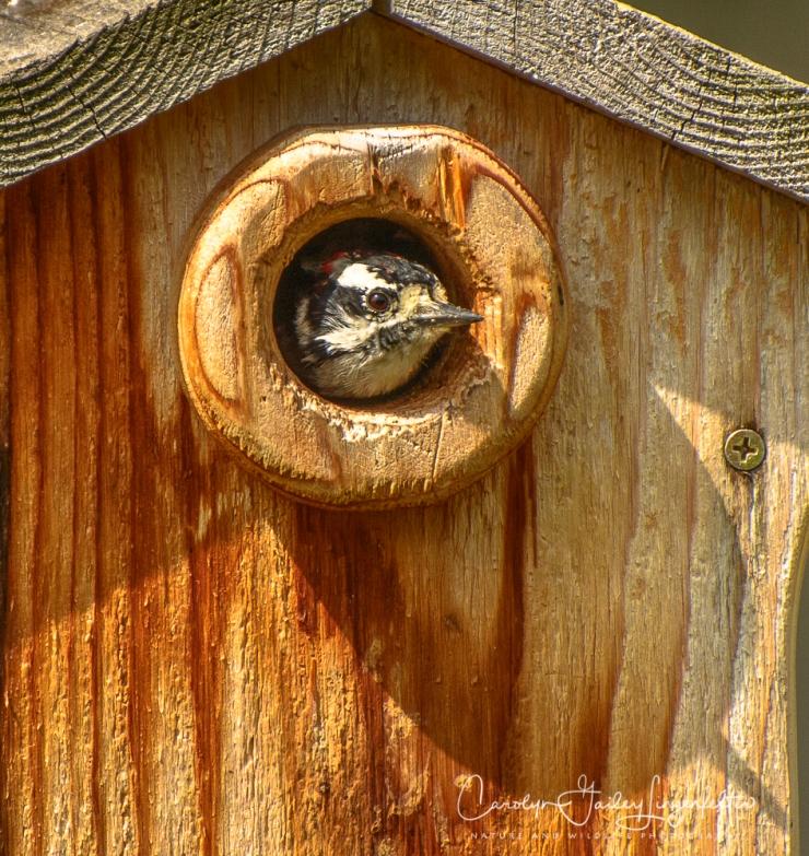 2018_08_30__Backyard birding_0026