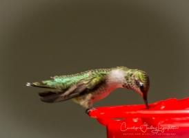 2018_08_30__Backyard birding_0053