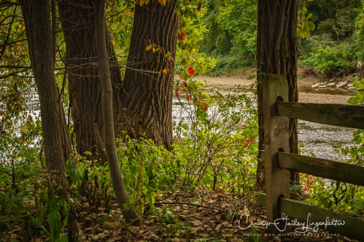2018_10_05__Chagrin River Park-Autumn 2018_0069