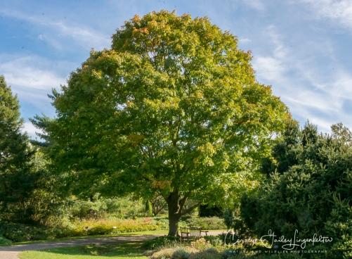 2018_10_16__Holden Arboretum_0001