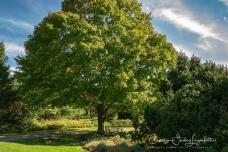 2018_10_16__Holden Arboretum_0004