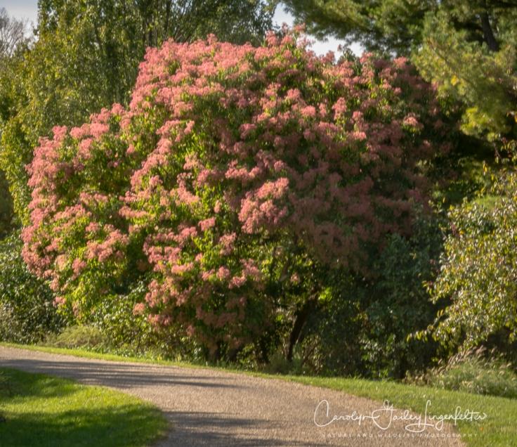 2018_10_16__Holden Arboretum_0005