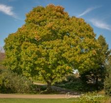2018_10_16__Holden Arboretum_0008