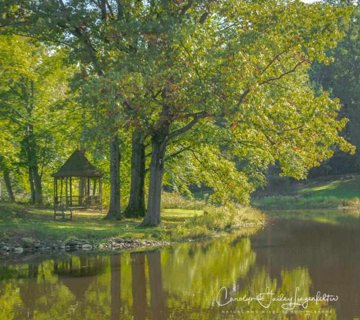 2018_10_16__Holden Arboretum_0020