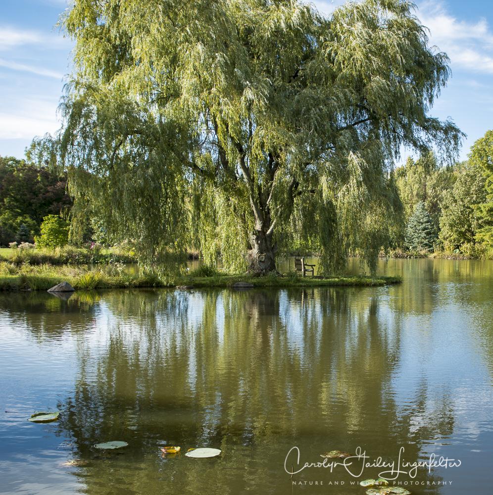 2018_10_16__Holden Arboretum_0047
