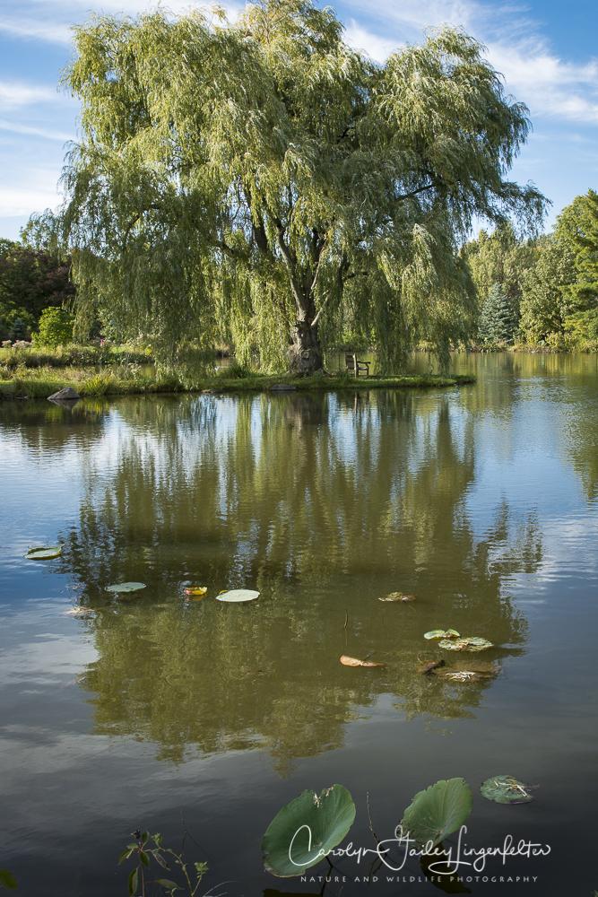 2018_10_16__Holden Arboretum_0048
