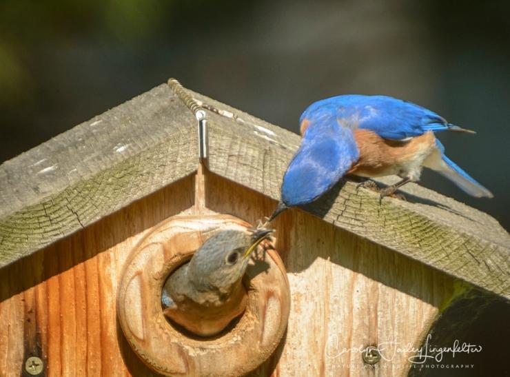 2018_06_14__Backyard birding_0070