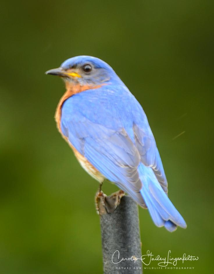 2018_06_15__Backyard birding_0059