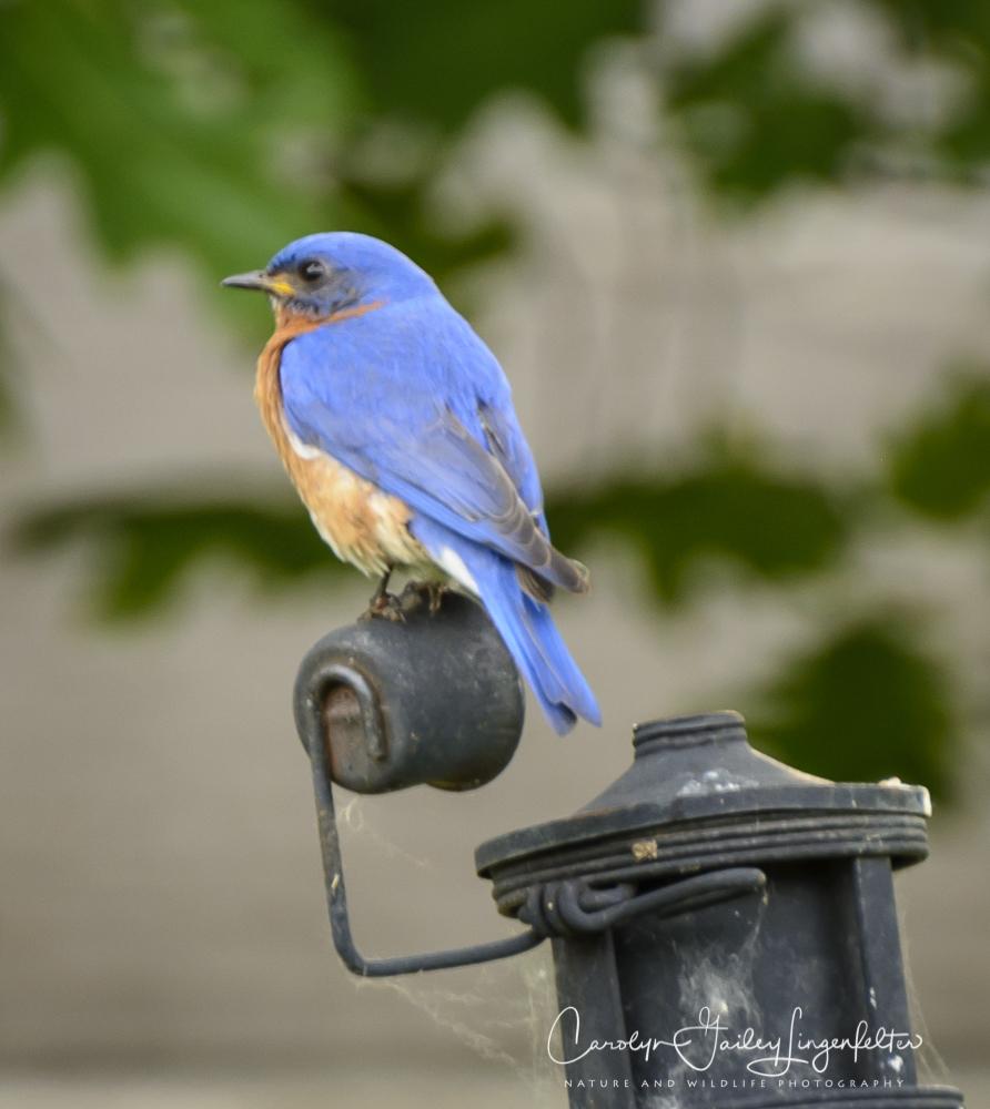 2018_06_15__Backyard birding_0068