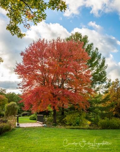 Autumn red near Lotus Pond