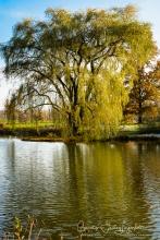 2018_11_11__Holden Arboretum_0012