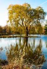 2018_11_11__Holden Arboretum_0019