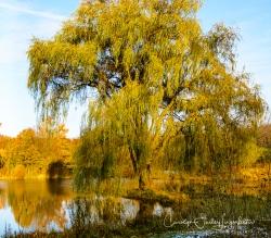 2018_11_11__Holden Arboretum_0022