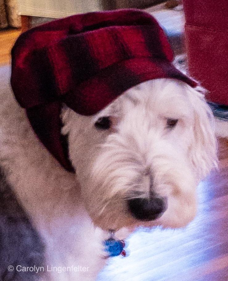 Mabel wearing plaid hat