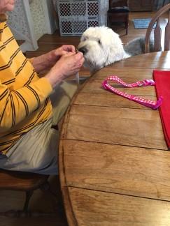 Watching Bob attach her new license