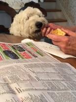 Sharing Bob's treat