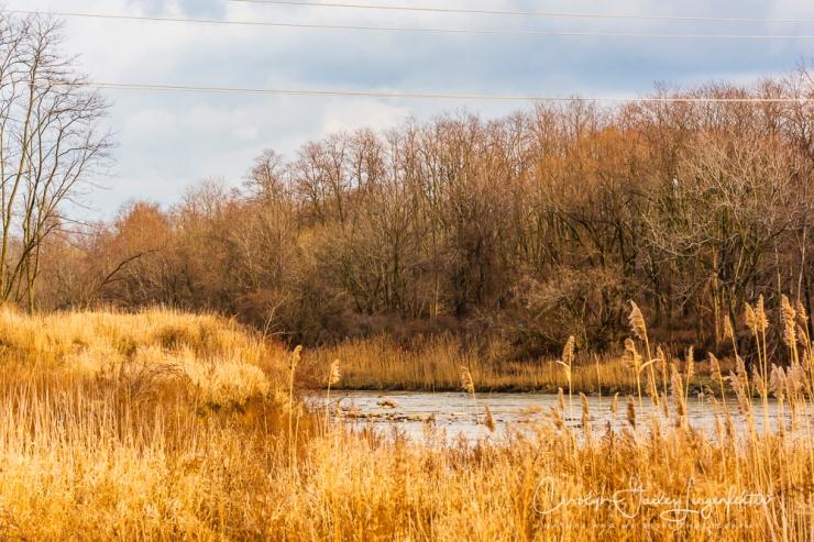 2019_01_08__chagrin river park_0071