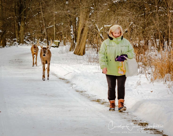 2019_01_22__chagrin river park_0116