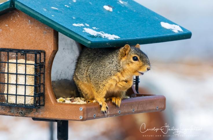 2019_03_04__Backyard birding_0001