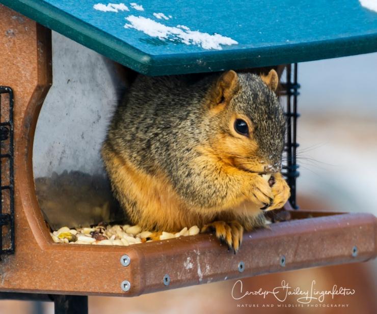 2019_03_04__Backyard birding_0005