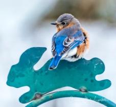 2019_03_04__Backyard birding_0040