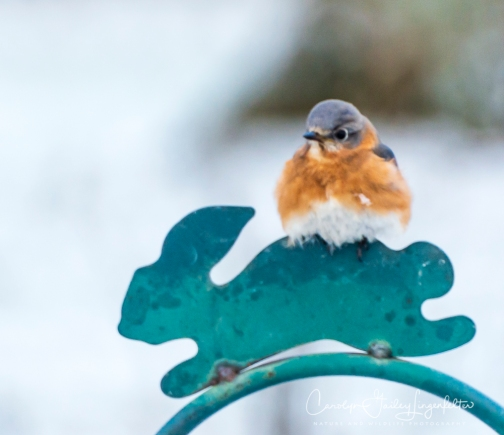 2019_03_04__Backyard birding_0043