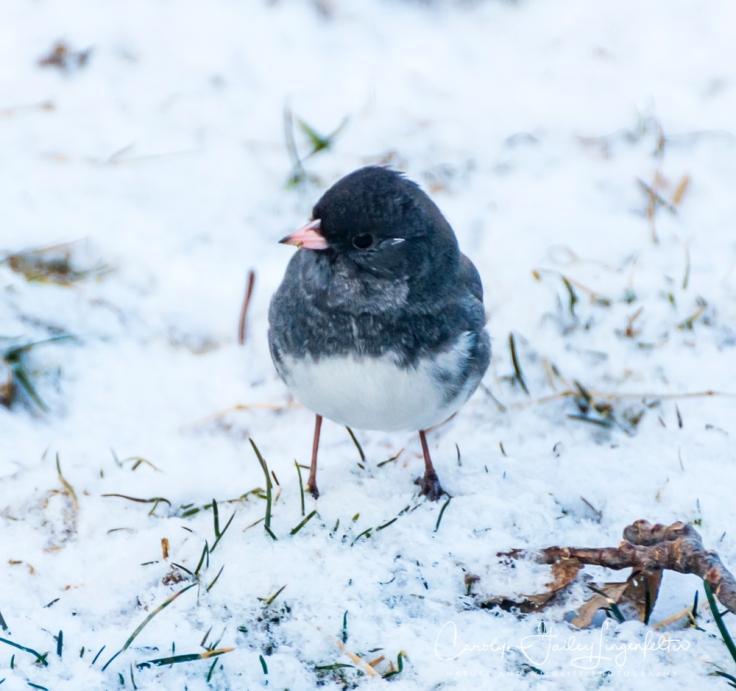 2019_03_04__Backyard birding_0062