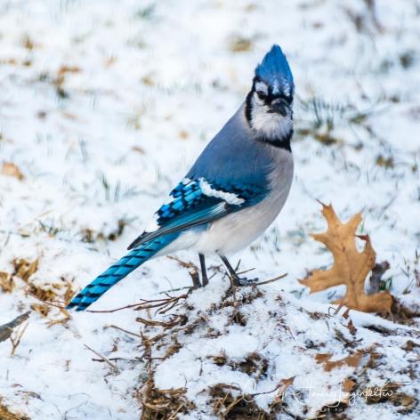 2019_03_04__Backyard birding_0068