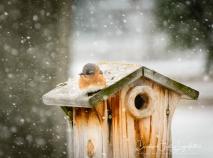 2019_03_05__Backyard birding_0017