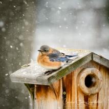 2019_03_05__Backyard birding_0020