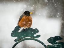 2019_03_05__Backyard birding_0027